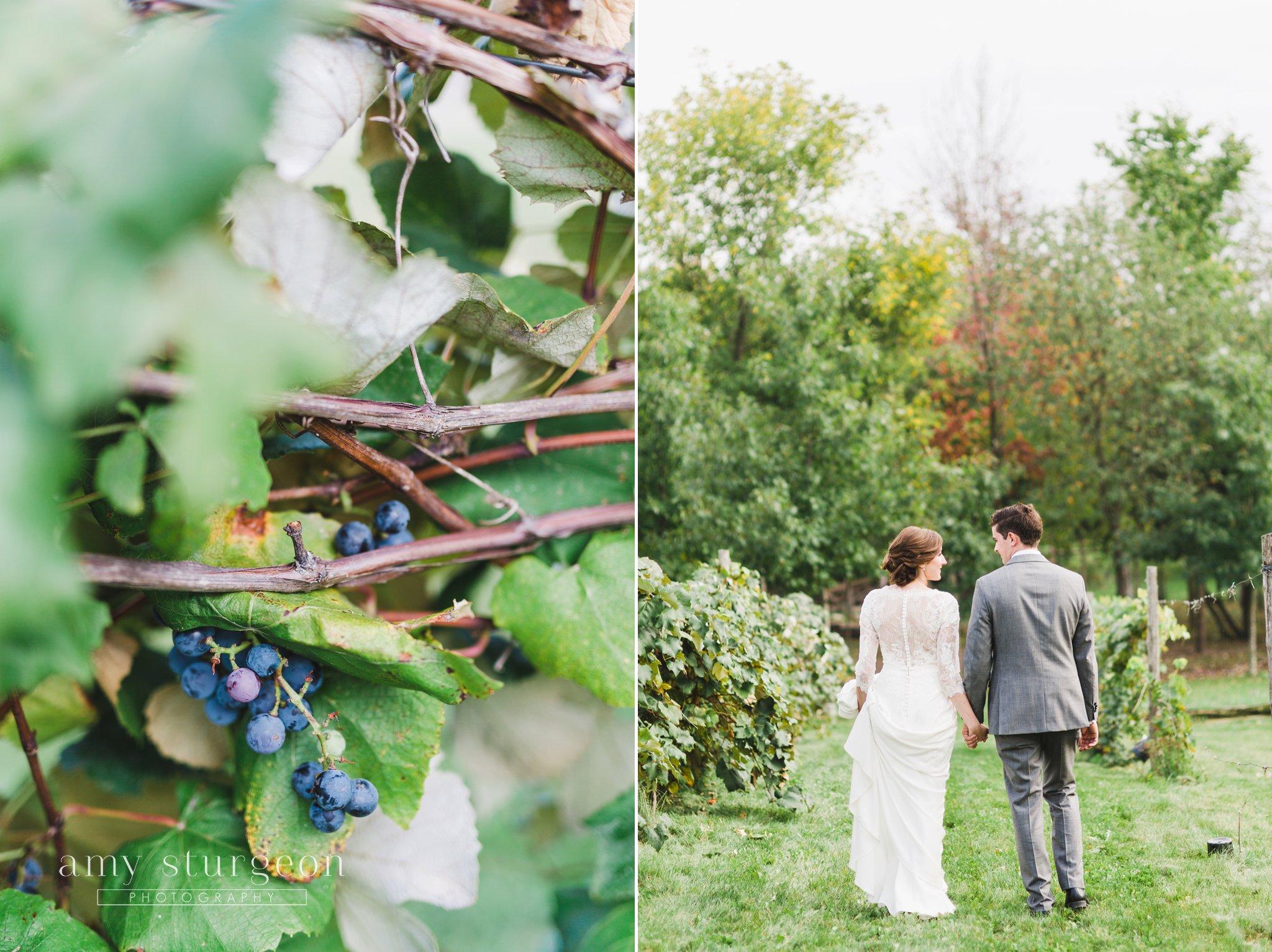 Vineyard wedding portraits at the alpaca farm wedding