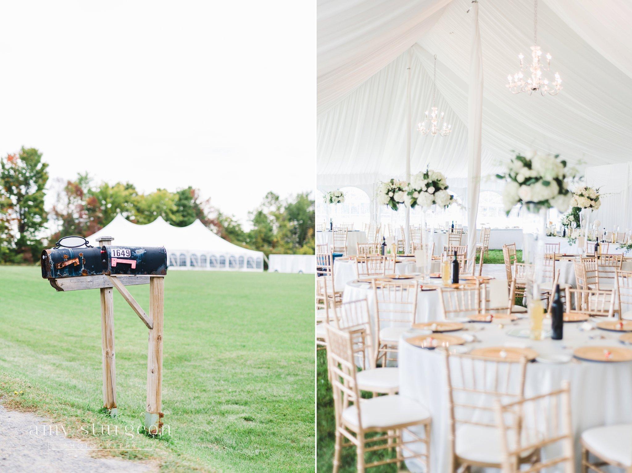 Gold chiavari chairs under the white draped ceiling tent at the alpaca farm wedding
