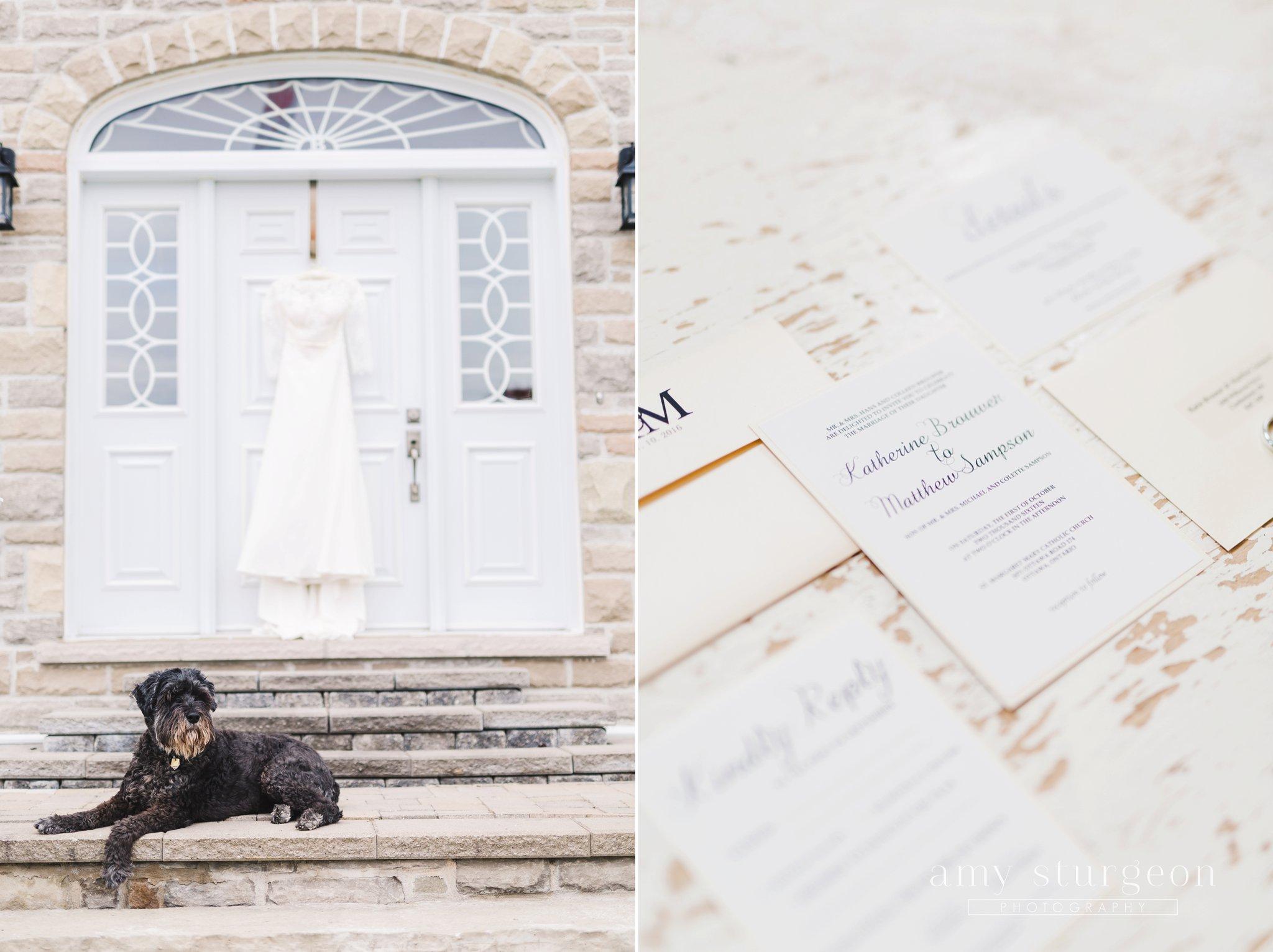 the bride's dog was always nearby at the alpaca farm wedding in ottawa