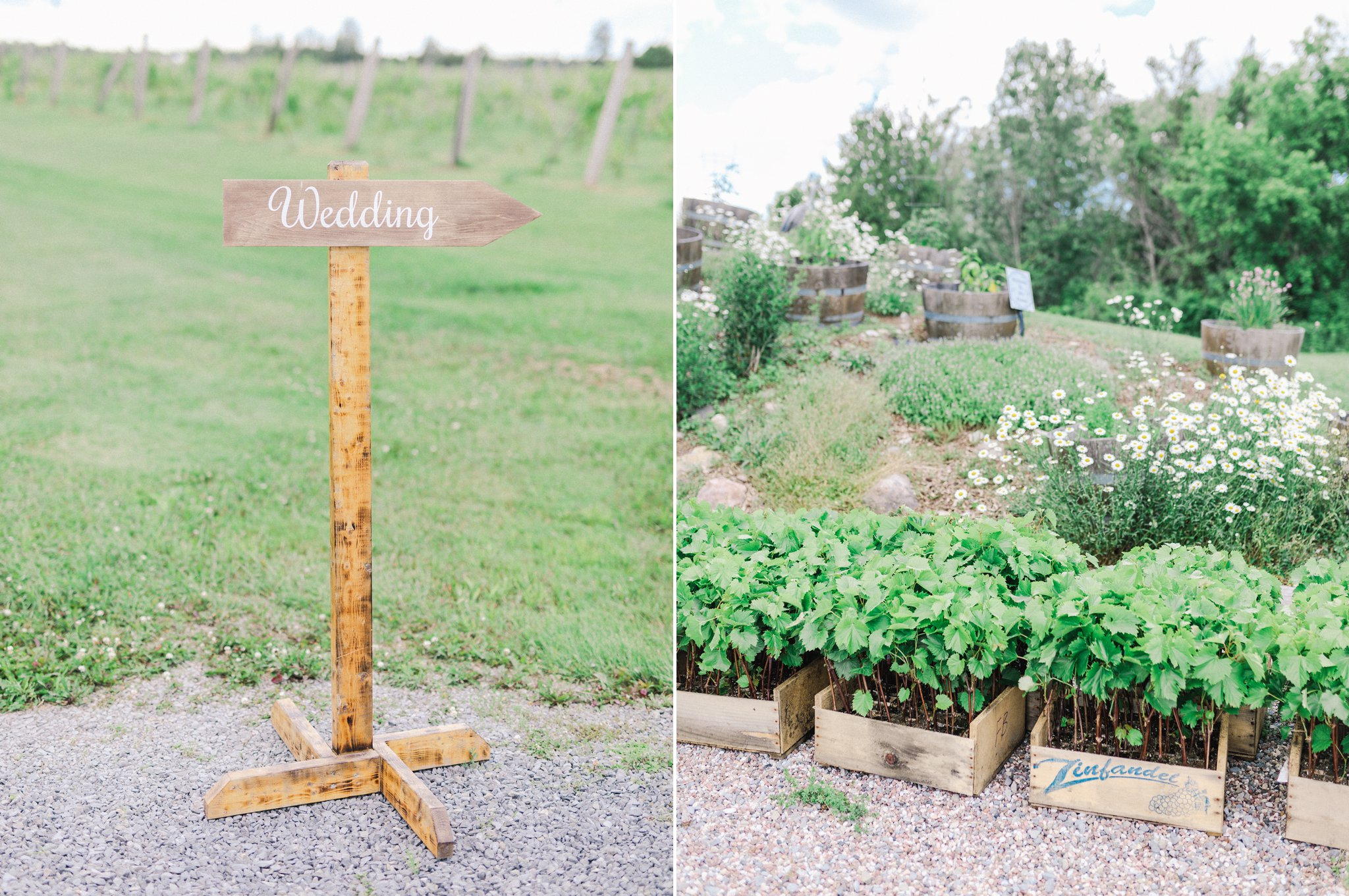 Wine tasting at their Jabulani vineyard wedding photos, Amy Pinder Photography, Ottawa wedding photographer