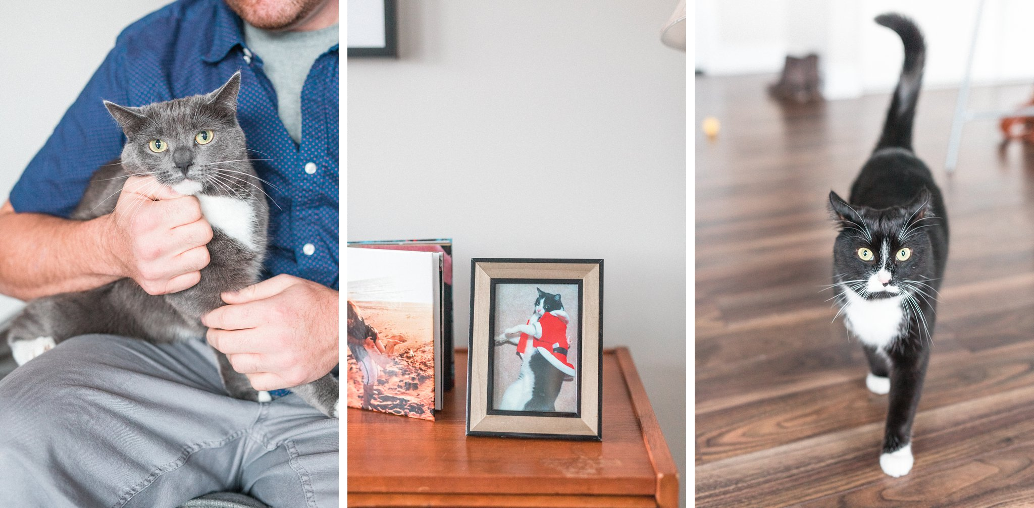 Lifestyle home photos with cats, Hogs Back Ottawa engagement photos