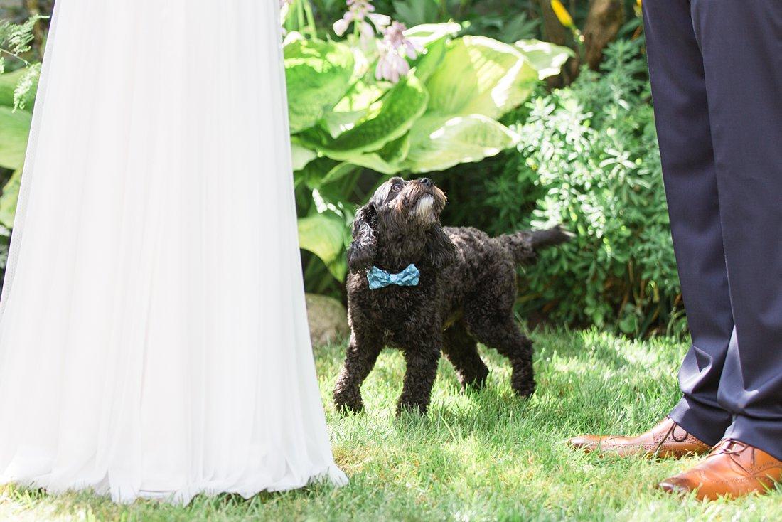 Dog at wedding ceremony, Social Restaurant Wedding Photos Ottawa