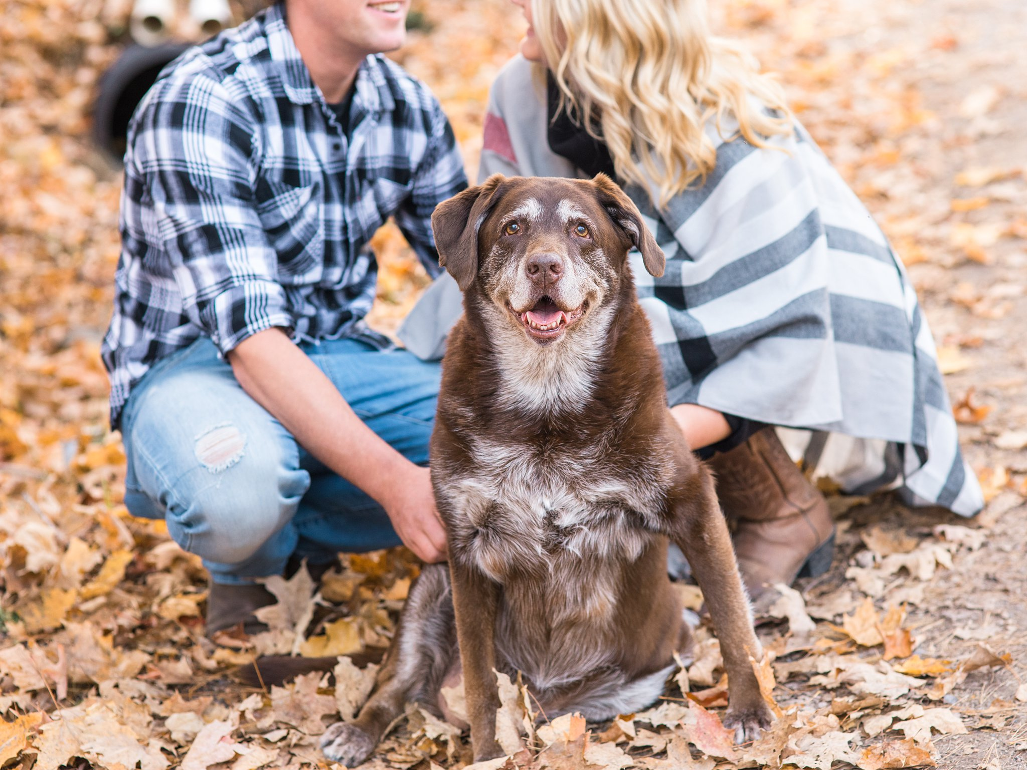 Grey face of old chocolate lab Old Chelsea Engagement Photos by Amy Pinder Photography